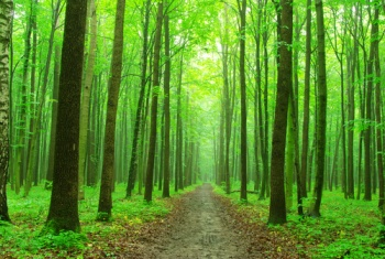 Path greenforest.jpg
