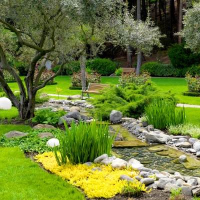 Picture of a Naturopathic Doctor's garden